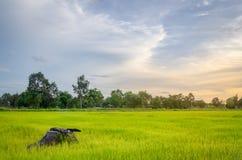 Обрабатывать землю в сельском Стоковое Изображение