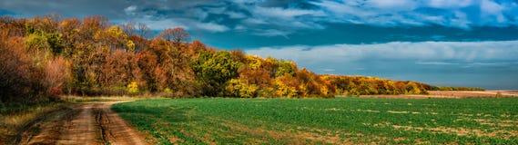 Обрабатывать землю на крае леса Стоковая Фотография