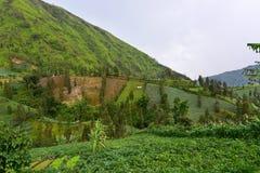 Обрабатывать землю на наклонах холма в East Java Стоковое Изображение