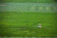 Обрабатывать землю Стоковое Изображение
