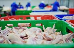 Обрабатывать птицы в пищевой промышленности стоковое фото