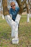 Обрабатывать хобота решения яблони limy Весна работает в саде стоковое изображение