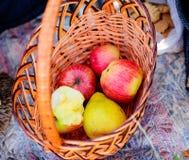Обрабатывающ землю, садовничающ, жмущ и концепция людей - близкая вверх плетеной корзины с зрелыми красными яблоками на саде осен Стоковая Фотография RF