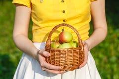 Обрабатывающ землю, садовничающ, жмущ и концепция людей - женщина вручает держать яблока Стоковые Изображения