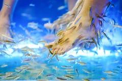 Обработка ног курорта рыб. Стоковые Изображения