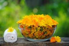 Обработка с цветками calendula Стоковое фото RF
