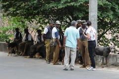 Обработчики полицейской собаки с собаками на улицах Канди Стоковая Фотография RF