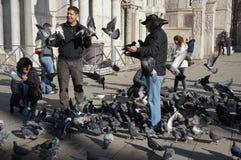 Обработчик и голуби голубя в квадрате St Mark, Венеции Стоковые Фотографии RF