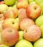 Образец блюда Apple Стоковая Фотография