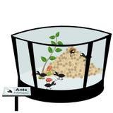 образец насекомых муравьев в зоопарке Стоковые Фотографии RF