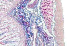 образец плекса 2 auerbach Стоковые Изображения