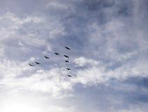 образование летания Стоковое Изображение RF