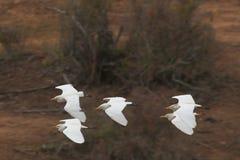 образование летания Стоковая Фотография