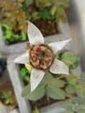 Образование семени стоковое фото rf