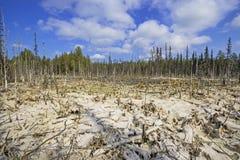 Образование трясин mesotrophic в taiga климатической зоны, лес-тундре зоны Архангельска стоковая фотография rf