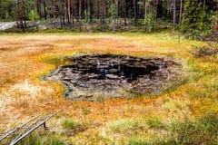 Образование трясин oligotrophic в taiga климатической зоны, лес-тундре зоны Архангельска стоковые фото