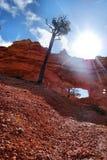 образования каньона bryce Стоковое Фото
