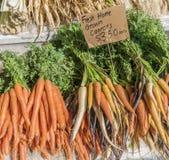 образовывает морковей Стоковое Изображение