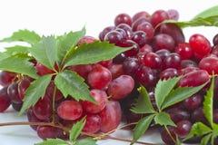 Образуйте зрелые, свежие красные виноградины с листьями Стоковое Фото