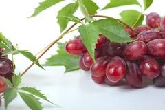 Образуйте зрелые, свежие красные виноградины с листьями Стоковая Фотография