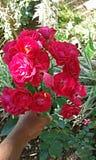 образуйте красные розы Стоковое фото RF