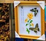 Образцы бабочки Стоковые Изображения RF