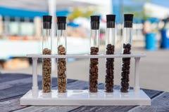 Образцы кофейных зерен показанных как демонстрация стоковое изображение rf