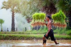 Образ жизни юговосточных азиатских людей в сельской местности Tha поля стоковое изображение rf