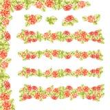 Обрамите границу линии роз персика нежных при картина зеленого сада листьев зацветая изолированная на белой предпосылке Стоковая Фотография RF