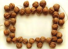 обрамите грецкий орех Стоковые Изображения RF