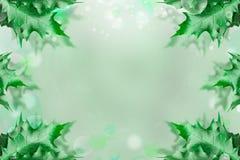 обрамите зеленые листья Стоковые Фото