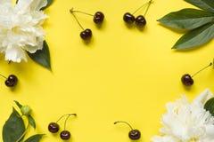 Обрамите от пиона белых цветков, зрелых вишен на яркой желтой предпосылке скопируйте космос Стоковые Изображения RF