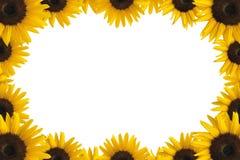 обрамите солнцецвет Стоковые Фотографии RF