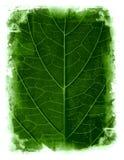 обрамленные предпосылкой листья grunge Стоковое Изображение RF