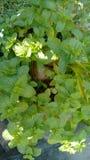 обрамленный зеленый горизонтально завод фото Стоковое Изображение