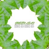 обрамляя листья зеленого цвета Стоковые Фото