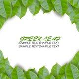 обрамляя листья зеленого цвета Стоковое Изображение