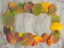Обрамленная покрашенная предпосылка листьев осени Стоковые Фотографии RF
