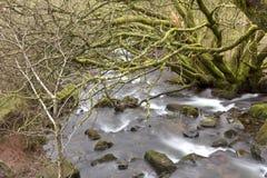 Обрамленный деревьями зимы стоковое фото rf