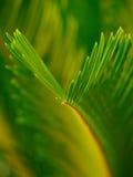 обрамленный зеленый горизонтально завод фото Стоковые Фото