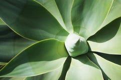 обрамленный зеленый горизонтально завод фото Стоковые Изображения