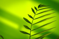обрамленный зеленый горизонтально завод фото Стоковая Фотография