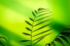 обрамленный зеленый горизонтально завод фото Стоковые Изображения RF