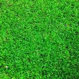 обрамленный зеленый горизонтально завод фото Стоковая Фотография RF