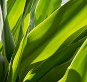 обрамленный зеленый горизонтально завод фото Стоковое фото RF