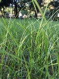 обрамленный зеленый горизонтально завод фото Стоковые Фотографии RF