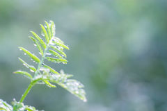 обрамленный зеленый горизонтально завод фото стоковое фото