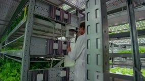 Обратное движение камеры вдоль коридора, современной вертикальной фермы с гидропоникой, ученых в белых включенных пальто, акции видеоматериалы