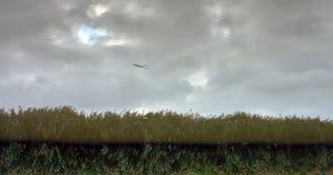Обращенное изображение schelde реки Стоковые Фото