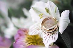 Обручальные кольца золота на белых лилиях Стоковые Изображения